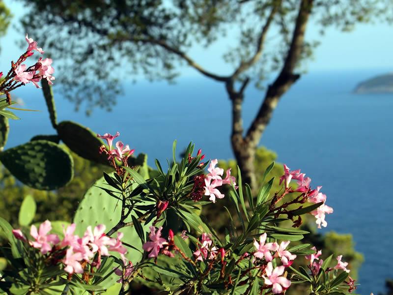 vegetazione e mare a Ibiza